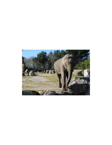Éléphant Zoo de Pont Scorff