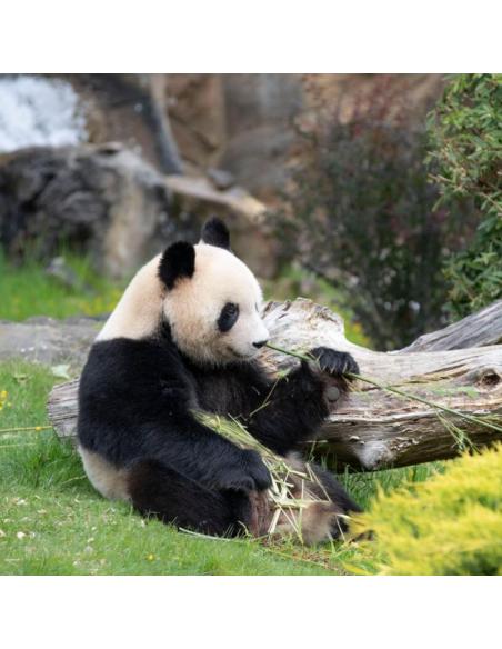 Zoo Parc de Beauval réductions - Opale CE