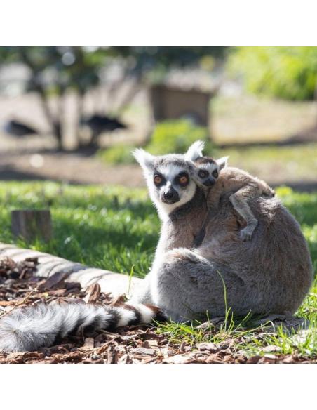 Zoo Parc de Beauval pas cher - Opale CE