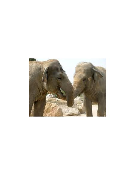 Éléphant Zoo la Barben